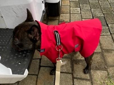 赤いレインコートを着たフレンチブルドッグの男の子