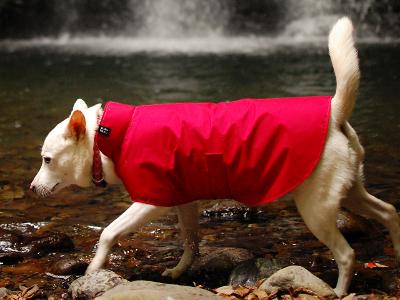 レインコートを着た紀州犬
