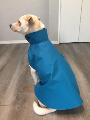 レインコートを着た犬の後ろ姿