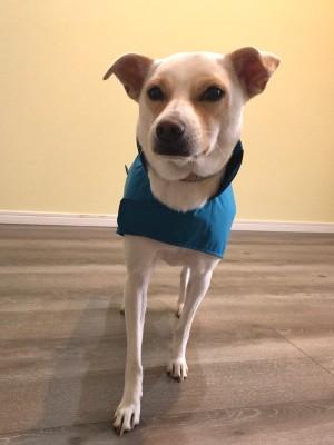 レインコートを着てポーズをとるミックス犬
