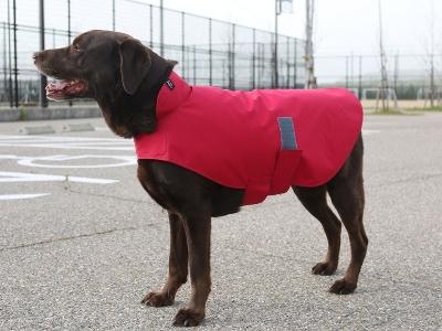 赤いレインウェアを着たラブラドールレトリバー