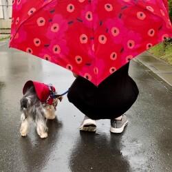 赤いレインコートを着てお散歩