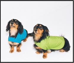 Nokaのレインコートを着たダックスフンド2匹