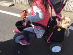 三輪車の後ろに乗る犬