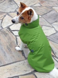 レインコートを着た日本犬ミックスのワンちゃん