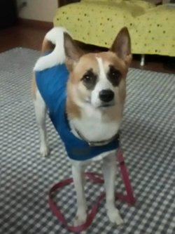 青色のレインコートを着たサラちゃん