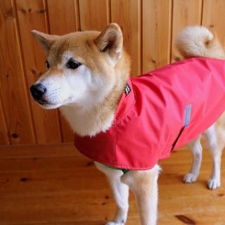 赤いレインコート姿の柴犬の男の子
